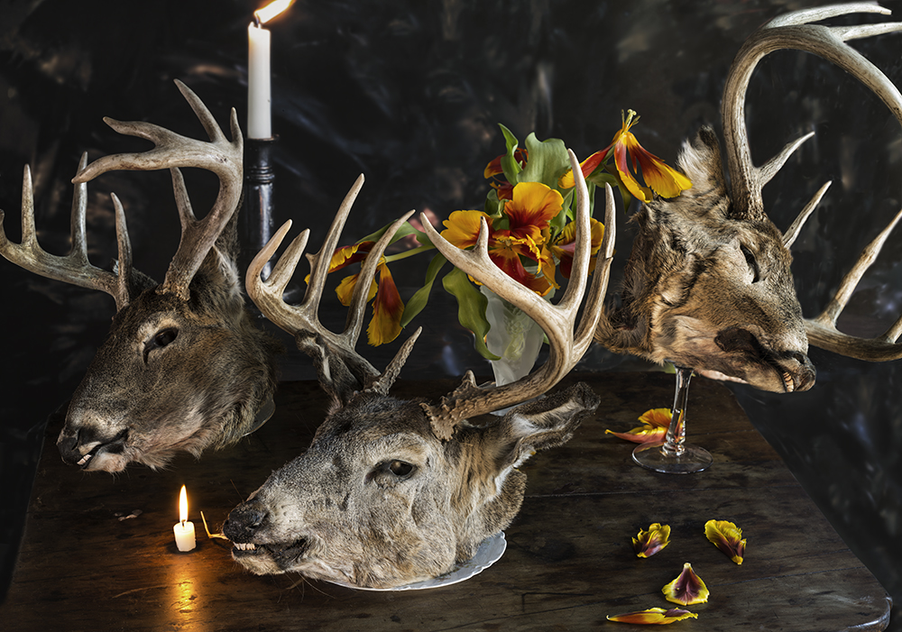 Werk: Four deer heads