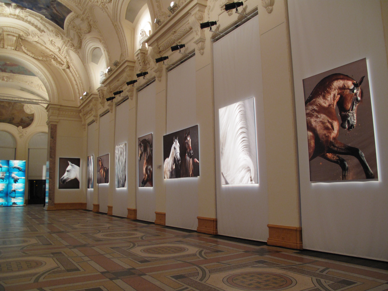 Einzelausstellung Petit Palais UNDERWATER HORSES // PARIS 2009
