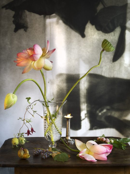 Werk: Lotusblume
