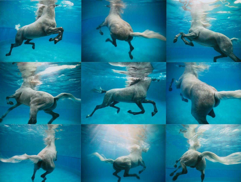 Werk: UNDERWATER HORSES