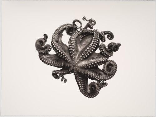 Werk: Octupus vulgaris